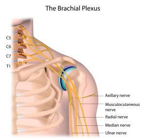 brachial plexus shoulder diagram